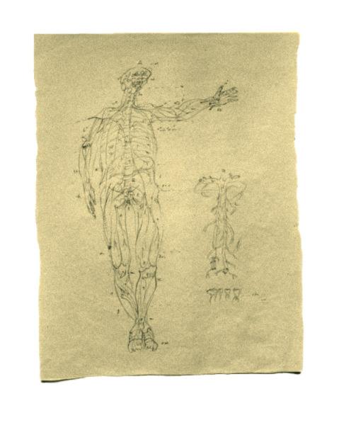 planche anatomique2